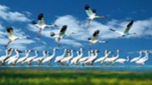 """保护候鸟作品―""""千纸鹤""""的奇幻旅程"""