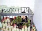 生母铁笼囚子