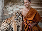 危险接触系列:老虎与僧人