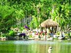 探秘海南热带雨林