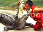 我与鳄鱼的亲密接触