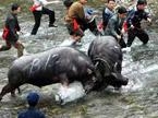我是冒险王20121107期:鲍春来见证疯狂的苗寨斗牛